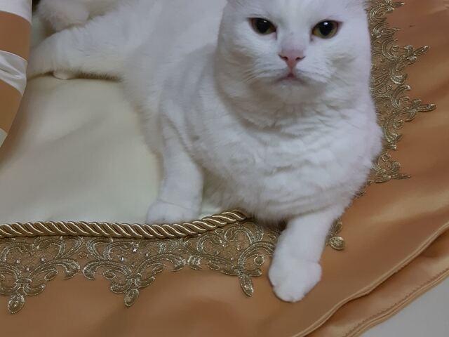 Комплект для кровати № 3 - «Queen» - 2