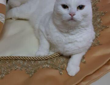 Комплект для кровати № 3 - «Queen» - Изображение 2