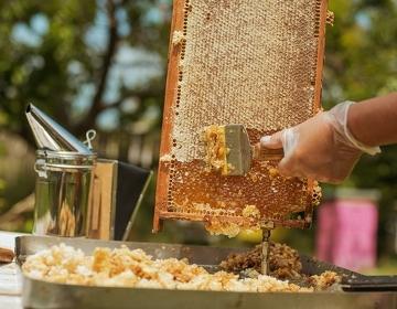 Лесной мед - Изображение 2